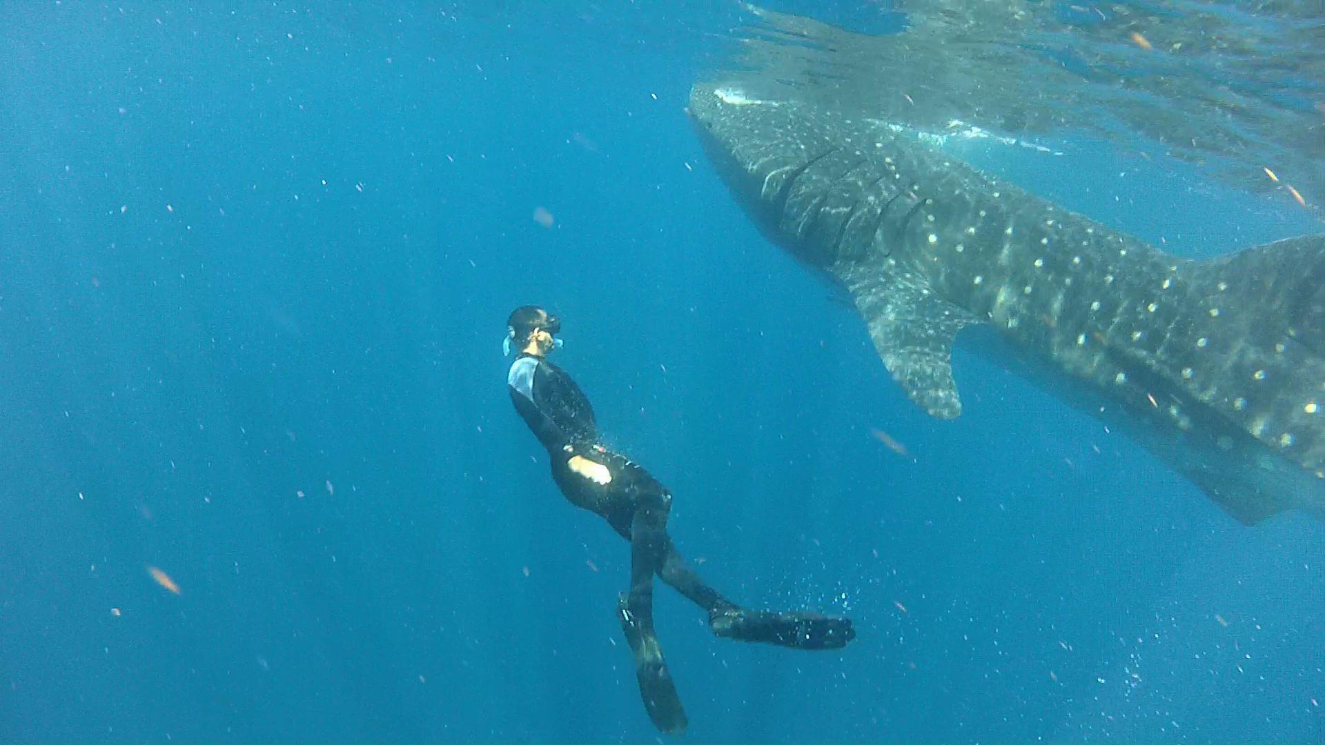 the virgin in island Diving