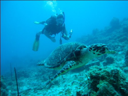 Scuba dive in St. Thomas, St. John Virgin Islands, www.patagondivecenter.com