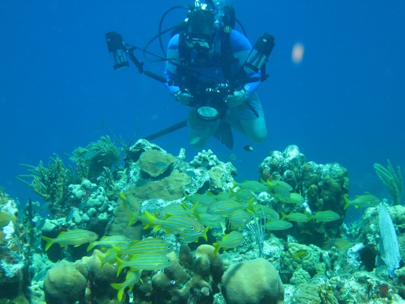 scuba diving in St. Thomas St. John United States Virgin Islands